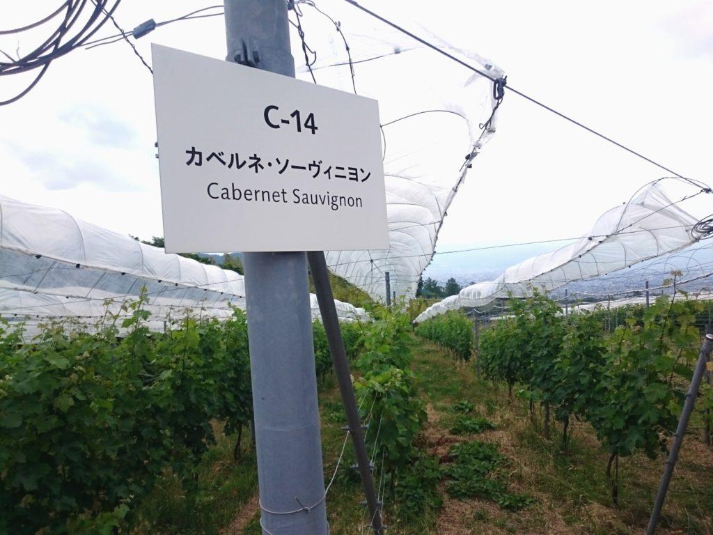 登美の丘ワイナリー 品種